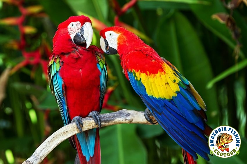 Eco-tourism in the Amazon