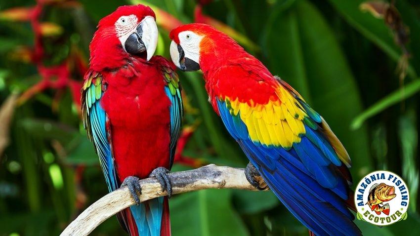 Ecotour - Amazon Region